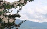 Monte S. Giulia